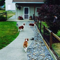 Top Dog Friendly Backyards | Healthy Paws