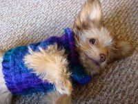 8 Dog Clothes That Are Actually Practical | Healthy Paws ...