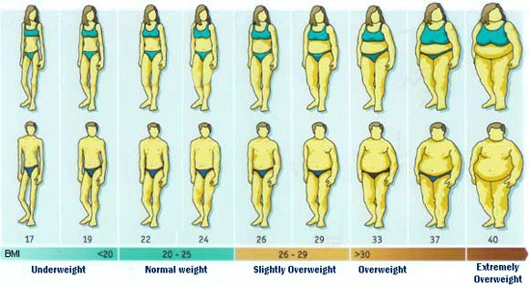 BMI Visual Graph See the Body Mass Index Visually