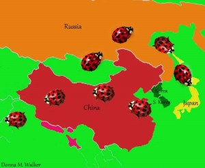 Map of Asian Lady Beetle Origins