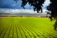 Farmland Tax Assessment for NJ Woodlands, Forests and Farm