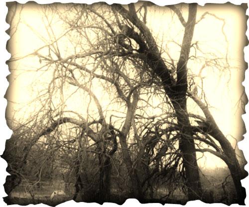 Woods of Willowmist
