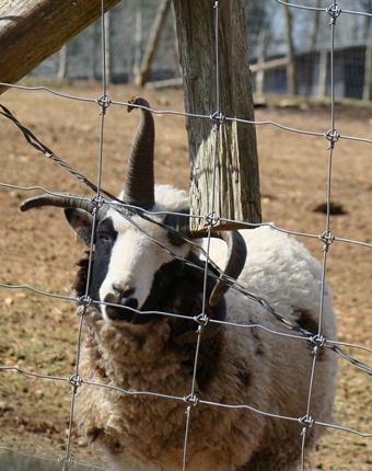 Circle G Ranch 4 horns