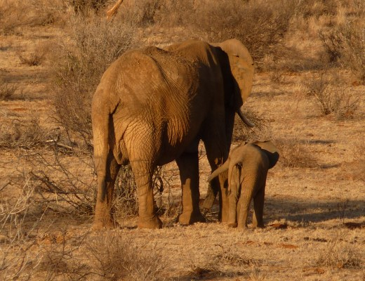 Samburu National Reserve