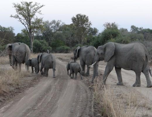 South Luangwa National Park Zambia (65)