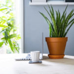 le piante da interno aiutano a lavorare meglio