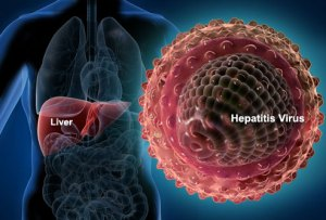 liver_and_hepatitis_virus
