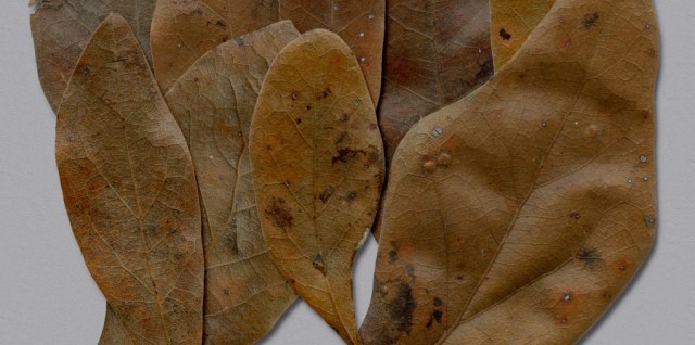 Free download ~ high resolution leaves saved as individual png files ~ courtesy of hgdesigns.co