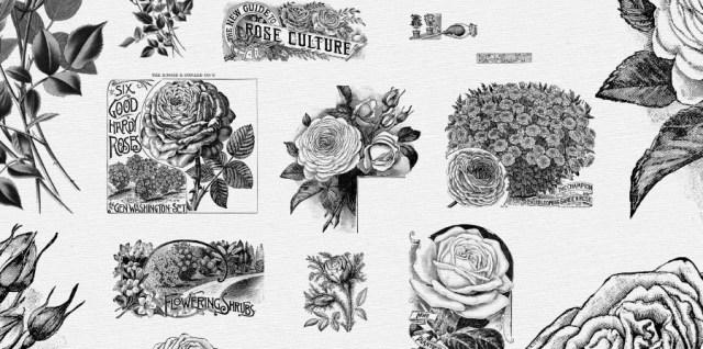 free download ~ vintage rose photoshop brushes plus image sheet
