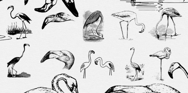Free download ~ vintage flamingo photoshop brushes and clip art ~ courtesy of www.hgdesigns.co