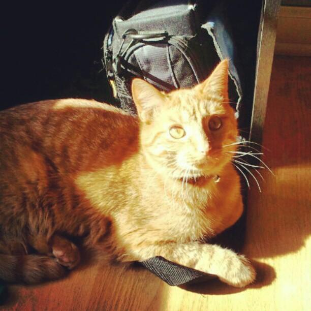 chester in sunshine