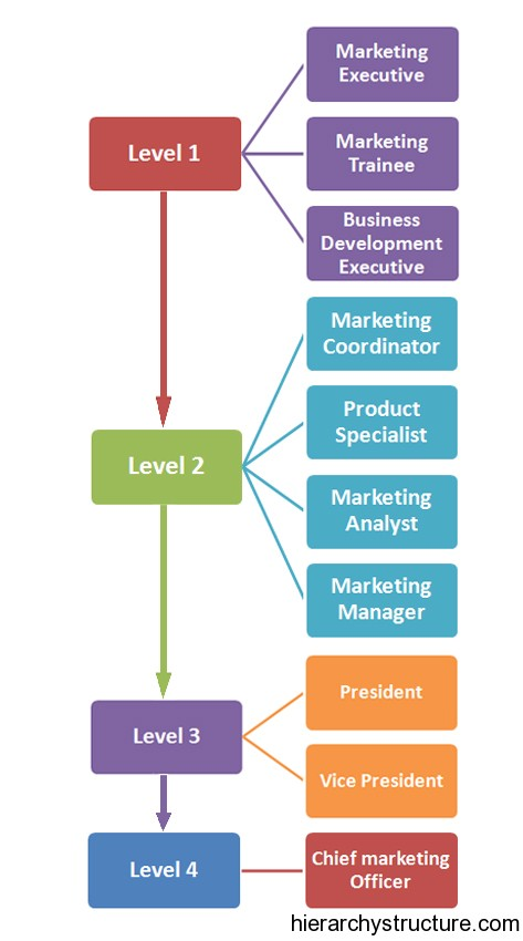 Marketing Career Hierarchy Marketing Titles Hierarchy