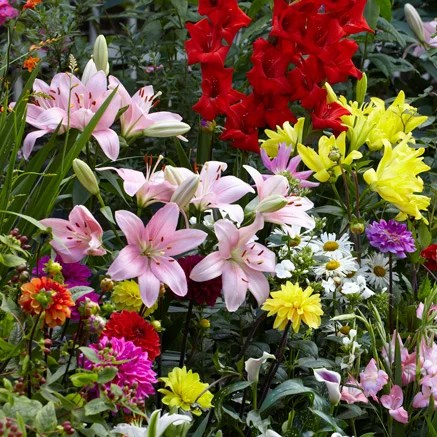 Flower Bulbs Sustainable Gardening High Country Gardens