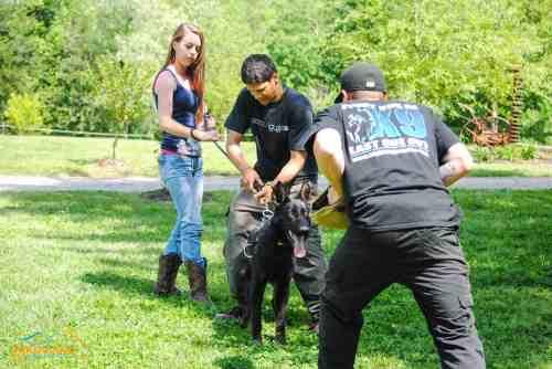 Medium Of Dog Trainer Salary