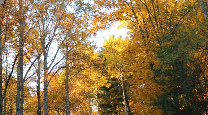 Leaves Are Changing. How about Real Estate?