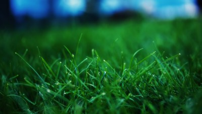 Close up grass wallpaper - HD Wallpapers