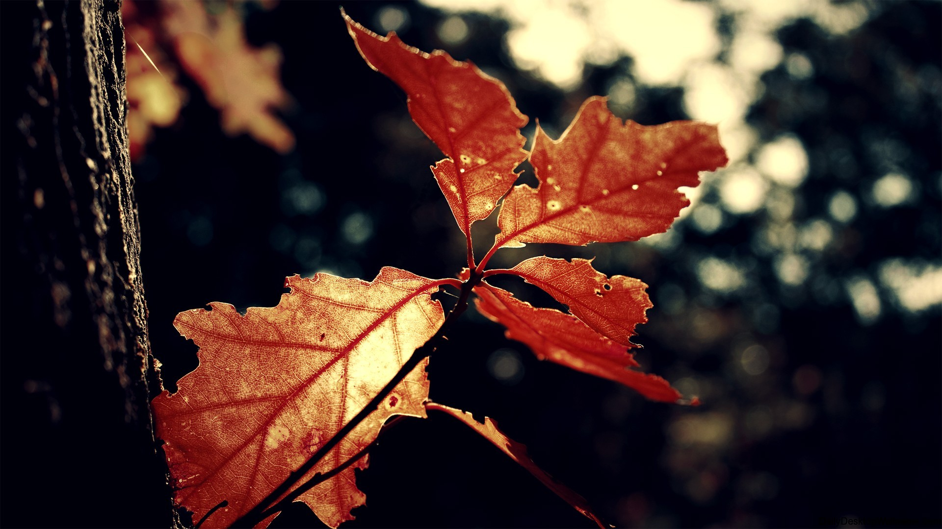 High Resolution Wallpaper Fall Autumn Oak Leaf Hd Wallpapers