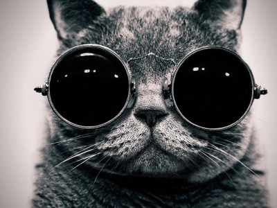 Cool Cat - HD Wallpapers