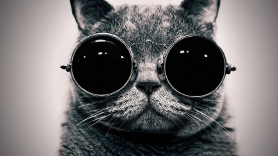 Cool Cat - HD Wallpapers