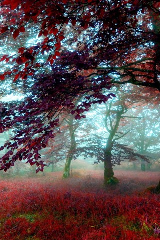 Nature Wallpaper - HD Wallpapers