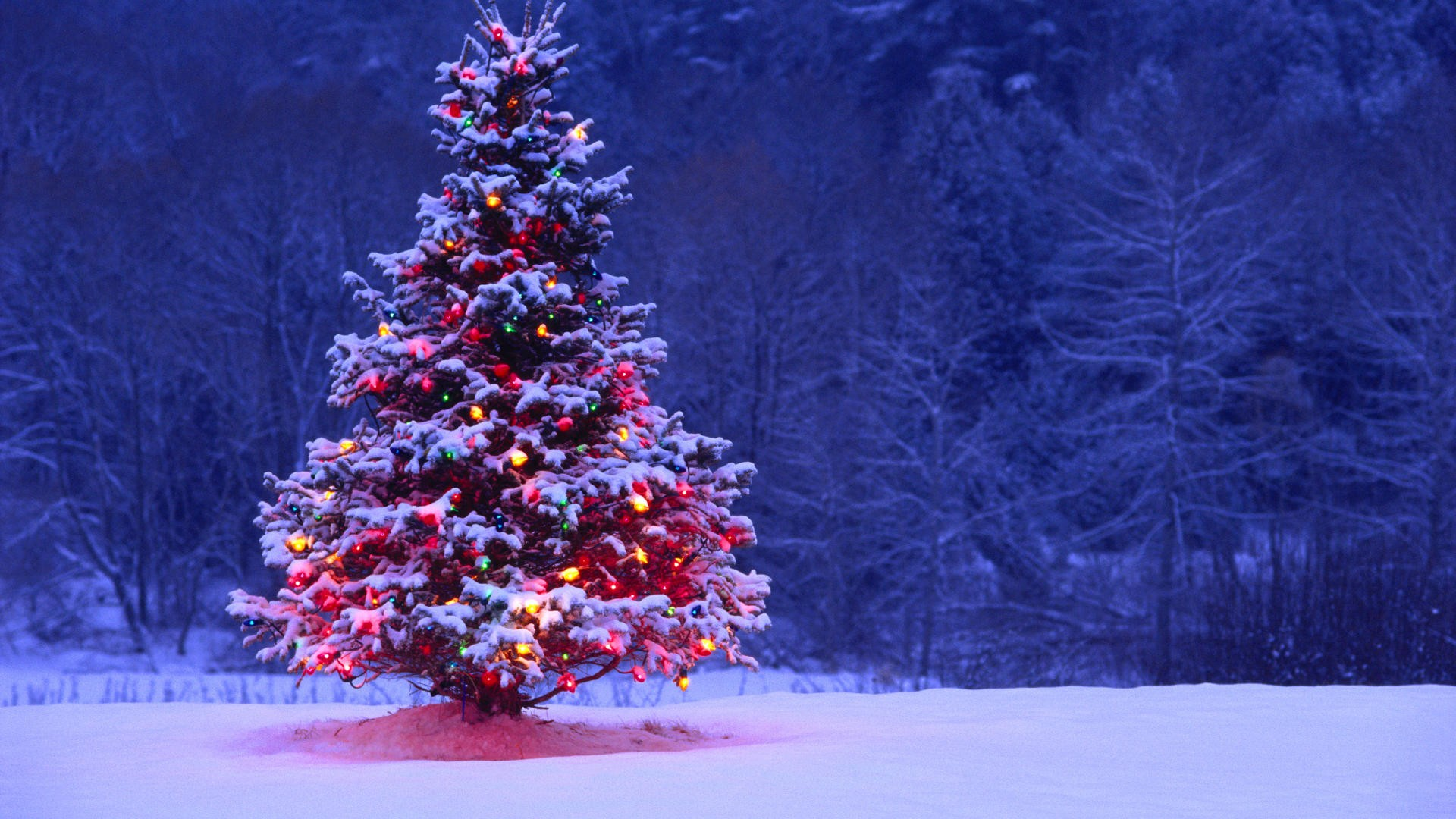 Light Covered Snowy Christmas Tree