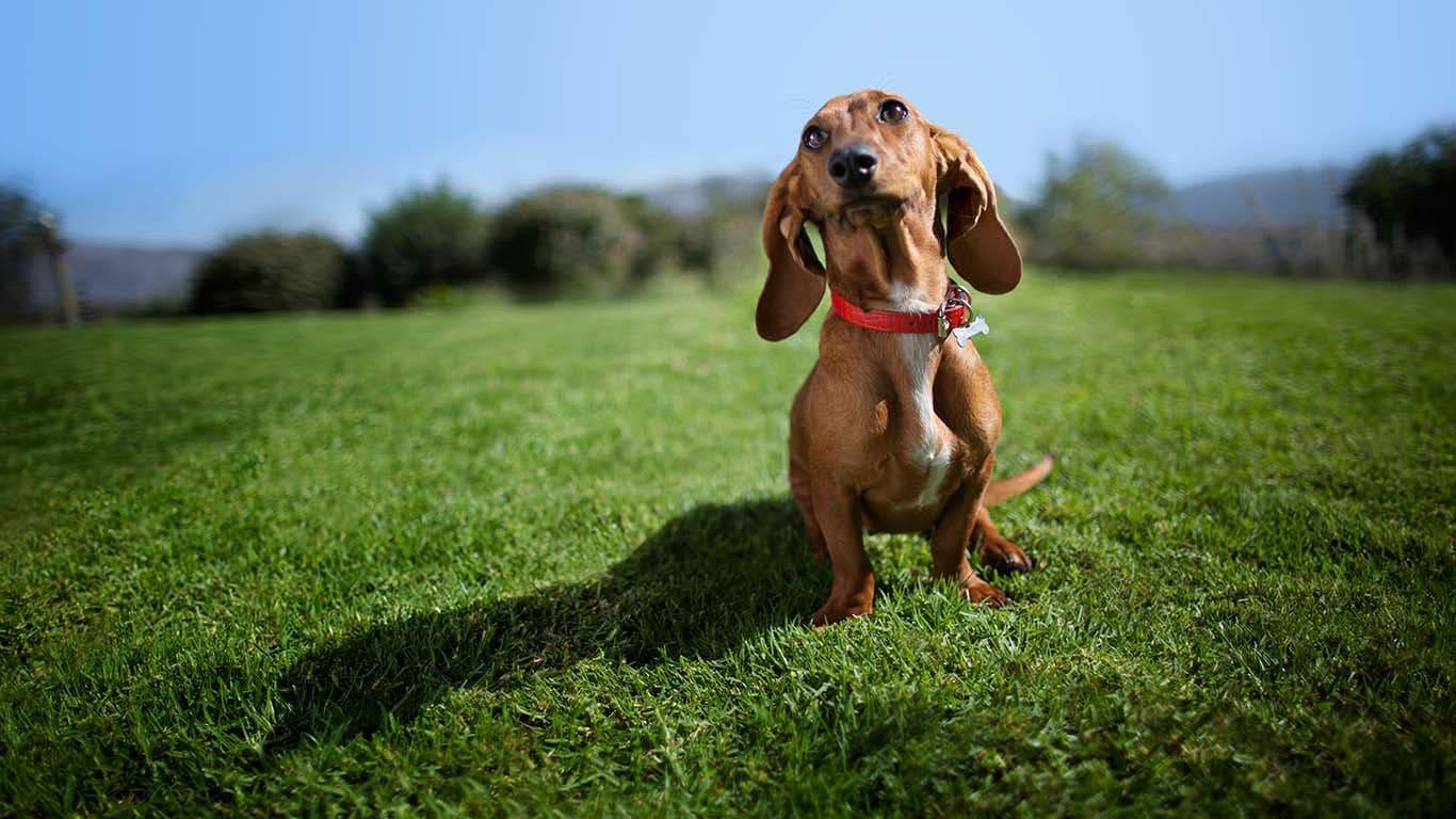 Fantastic Dog Resources Tools Pet Pet Nutrition Dog Cat Food Transforming Lives Dog Meme Avi Gif Dog Meme Avi 1 Hour bark post Dog Meme Avi