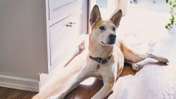 Small Of Dog Iq Test