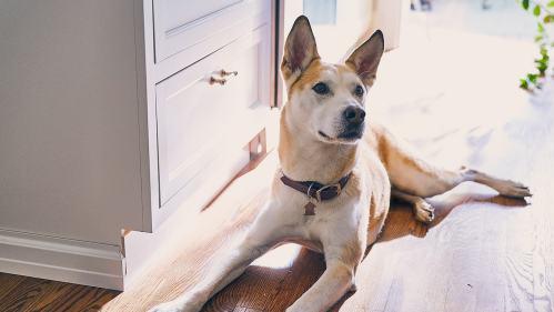 Medium Of Dog Iq Test