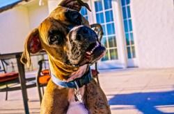 Small Of Why Do Dogs Tilt Their Head