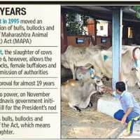 Maharashtra - #BeefBan Rs 10,000 fine and 5 years jail for possession orsale #WTFnews