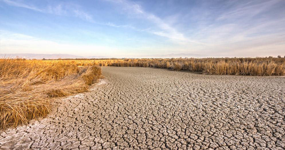 Farming Hinode Rice In California's Drought