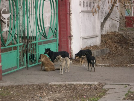 five stray dogs on sidewalk by a gate