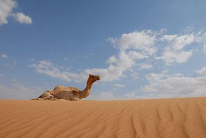 camel-in-sand