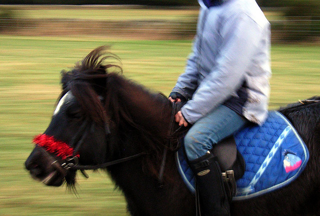 girl on pony tim bayman