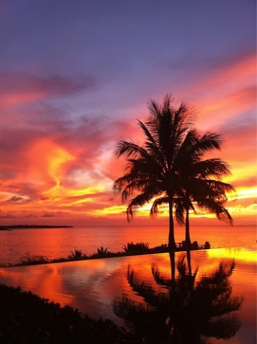 Free Fall Tree Wallpaper Anguillan Paradise His And Hers Vacations