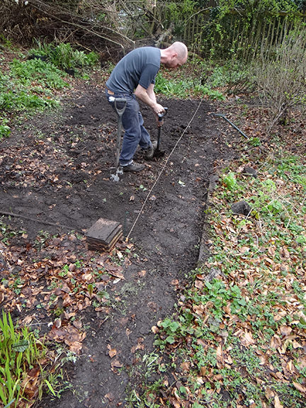 Justin digging and weeding a bed on the allotment
