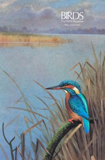 illustration of a kingfisher from a vintage 1970s RSPB magazine
