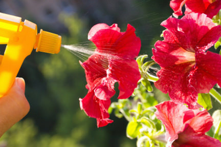 red flowers being sprayed with a yellow water bottle