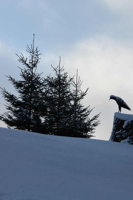 Statue of a bird and fir trees in a snowy landscape