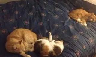 Tres gatas que parecen perras: mi historia