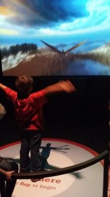 Pterosaur exhibit NHM