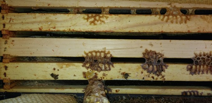 A starved hive