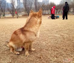 小狗慘被遺棄,主人卻沒有任何罰則。 網上圖片