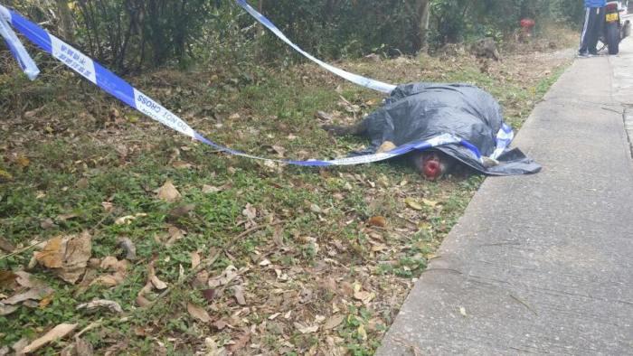 西貢野豬疑被車撞死。
