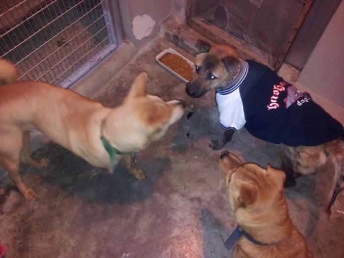 珍寶珠現在暫養主人家中居住,同住的還有兩隻小唐狗。