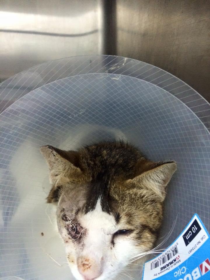 白果的右眼因打架受傷而要割除,但牠已獲好心人領養,可以在有愛的家生活。