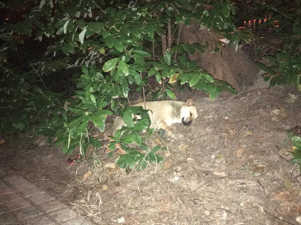 鑽石山墳場上的小狗(唐狗會學習營圖片)