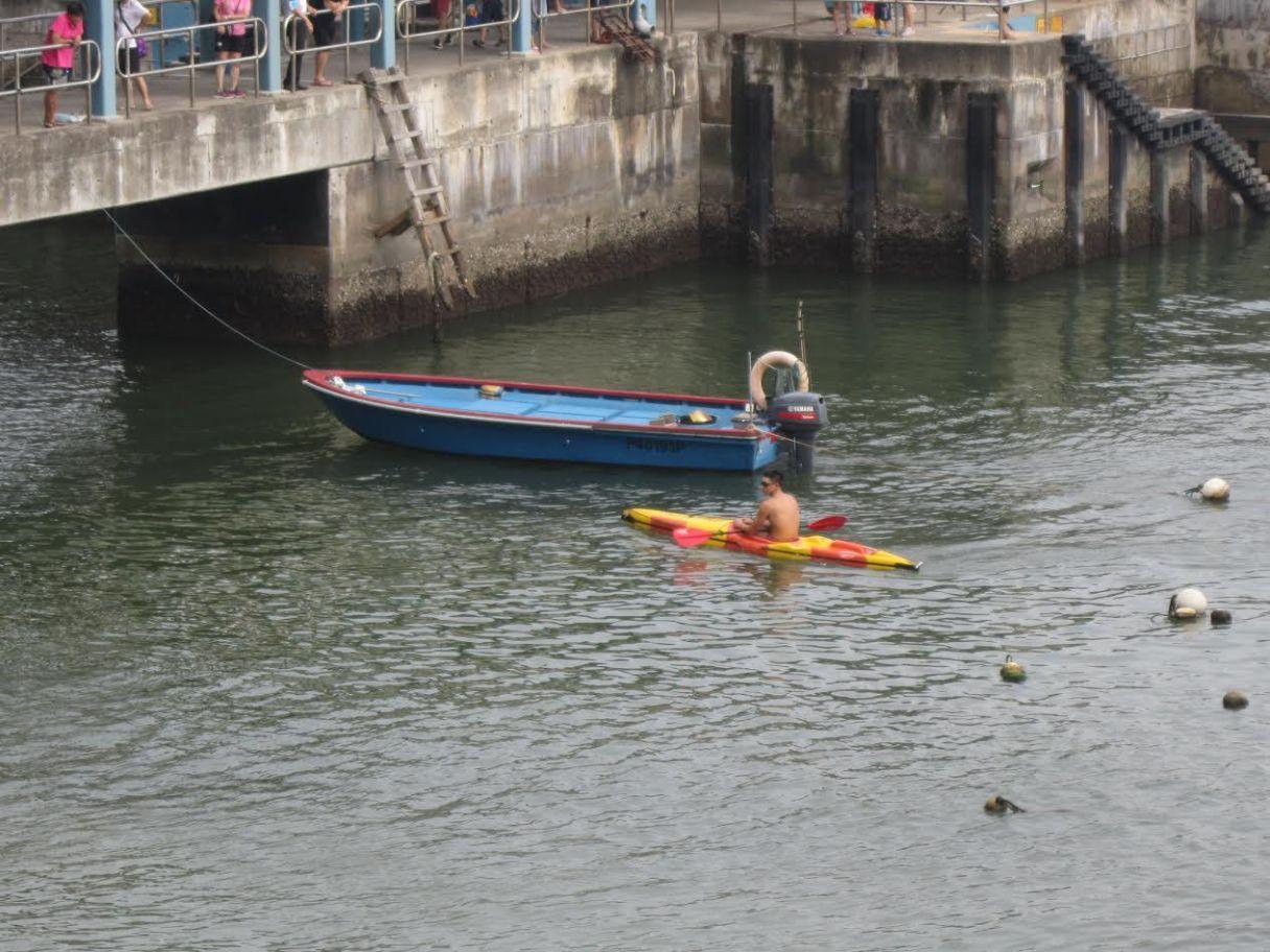 救生員到防鯊網救受困巴西龜