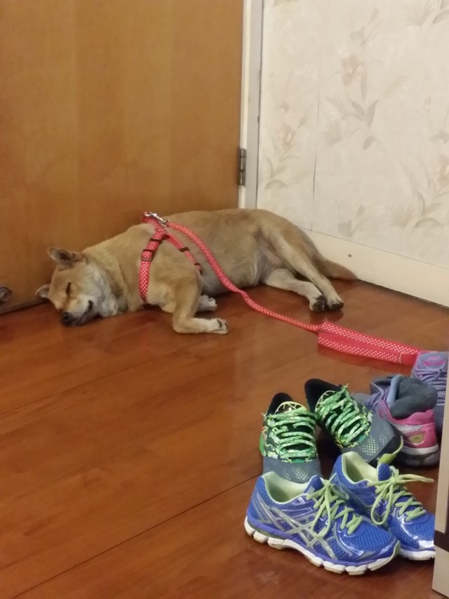 美美救出後,安穩地在家中休息。