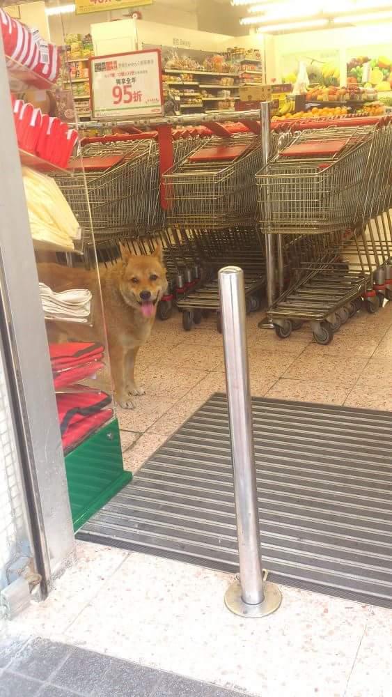 美美走入超市內歎冷氣。相片由甘先生提供